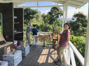 ハラツリー・コーヒー農園