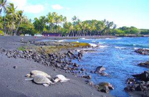 ハワイ島 プルナウ黒砂海岸